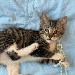 Кошки - Невероятно ласковый малыш Сеня 4 мес ищет дом, 0
