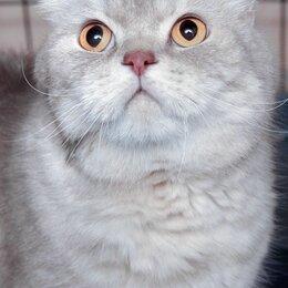 Кошки - Лилуш, мягкий ласковый пушистик, 0