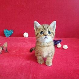 Кошки - Шикарный котик с хвостиком как у енота, 0