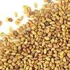 Семена люцерны изменчивой Сорт: люция по цене 300₽ - Семена, фото 0