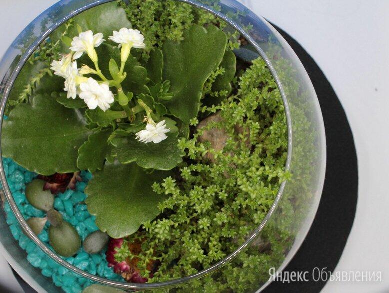 """Флорариум """"Кувшинка"""" по цене 1500₽ - Комнатные растения, фото 0"""