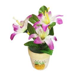 Комнатные растения - Цветы в горшке 11х16см, 0