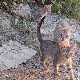 Кошки - Котята от крысоловки , 0