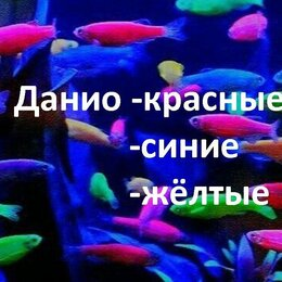 Аквариумные рыбки - Данио(Аквариумные рыбки), 0