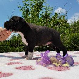 Собаки - Щенки стаффордширского бультерьера, 0