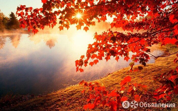 Клен остролистный по цене 18700₽ - Рассада, саженцы, кустарники, деревья, фото 0