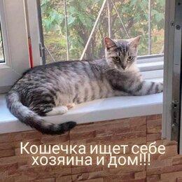 Кошки - Кошки Соня ищет дом, отдам в добрые руки, 0