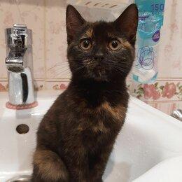 Кошки - Котёнок девочка 1,5 месяца , 0