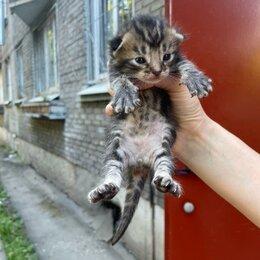 Животные - Котята, 0