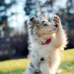 Услуги для животных - Выгул собак, 0
