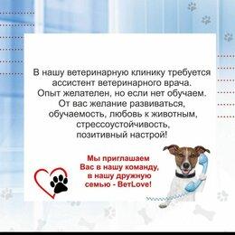 Работа с животными - Ветеринарный фельдшер/ассистент, 0