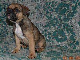 Собаки - Французский бульдог. Девочка. Цвет Эксклюзив, 0