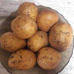 Продукты - Картофель , 0