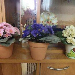 Цветы, букеты, композиции - Сенполия узамбарская фиалка на подоконнике, 0