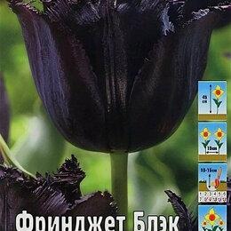 Луковичные растения - Тюльпан фринджет блэк бахромчатый , 0