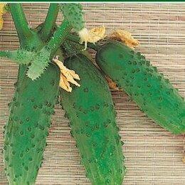 Семена - Огурец Три Танкиста F1 Манул, 0