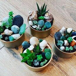 Комнатные растения - Минисадики из суккулентов. Суккуленты. Растения., 0