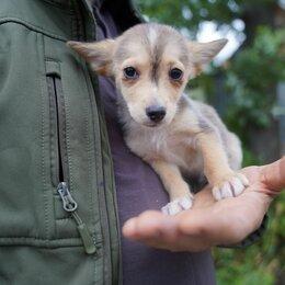 Собаки - Щенки от маленькой  собаки, 0