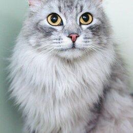 Кошки - Шикарный котик Салют! Добрый и ласковый, как оказался на улице - не понятно 😦, 0