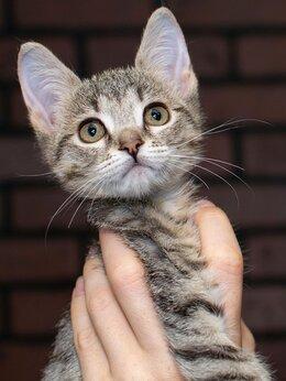 Кошки - Маленькая озорная милашка Августа, 0