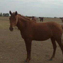Лошади - Продам лошадь , 0