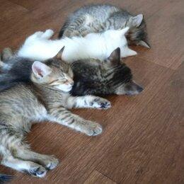 Кошки - Пушистые красавцы ищут любящих хозяев., 0