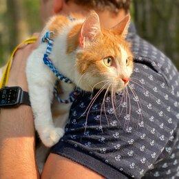 Кошки - Рыжая Добрюша в дар! , 0