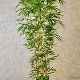 Искусственные растения - Дерево бамбука высота 1м.80 см, 0