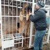 Собаки-гиганты, охранники и друзья по цене даром - Собаки, фото 7