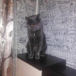 Животные - Пропал кот город королёв, 0