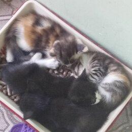 Кошки - Домашние животные коьятя, 0