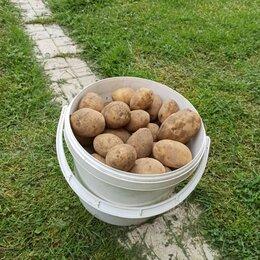 Продукты - Картофель свежий урожай, 0