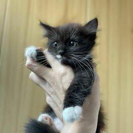 Кошки - Пушистая как куколка домовёнок Леся 2,5 мес ищет дом, 0