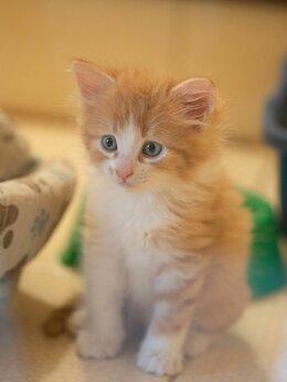 Кошки - Солнечный котёнок Цукат ждёт семью в Лесном приюте, 0
