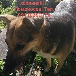 Животные - Найдена собака. Ищет хозяина⚠️, 0