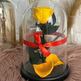 Цветы, букеты, композиции - Роза в  стеклянной колбе. Премиум. (цвет в ассортименте!), 0