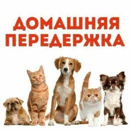 Услуги для животных - Передержка собак , 0