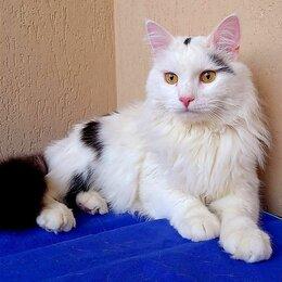 Кошки - Шикарный кот Барон, 0