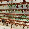 Высоко рентабельный бизнес ферма Живых Бабочек по цене 59999₽ - Сельское хозяйство, фото 2