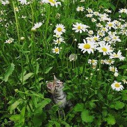 Кошки - Кошечка Тигришка, 0