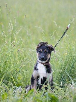 Собаки - Отдам щенка в добрые руки, 0