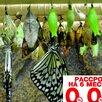 Высоко рентабельный бизнес ферма Живых Бабочек по цене 59999₽ - Сельское хозяйство, фото 0