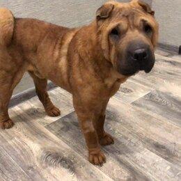 Собаки - Молодой пёс Бакс, 0