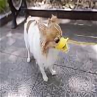 Намордники и недоуздки  - Силиконовый намордник для собак мелких пород Уточка 106226, 0