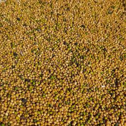 Продукты - Горчица желтая сорт Горлица 100 тонн, 0