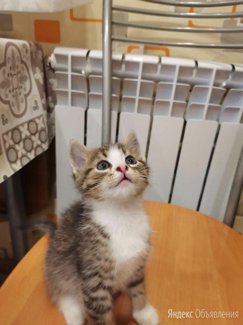 Бродячие Бенгалята!) по цене даром - Кошки, фото 0