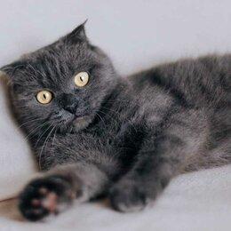 Кошки - Мишель , 0