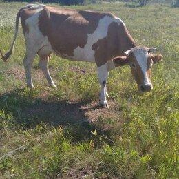 Сельскохозяйственные животные и птицы - Коровы дойные, 0
