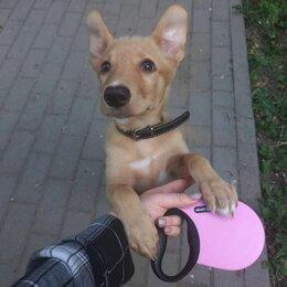 Собаки - 5 щенков ищут дом и доброго человека, 0