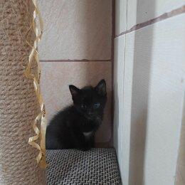 Кошки - Черный котенок мальчик , 0